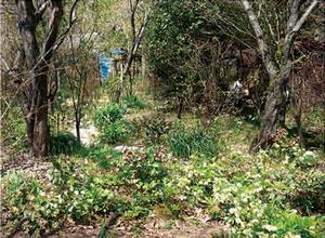7. 田中ガーデン