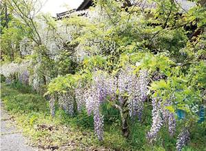 11. たぬきの庭