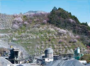 21. 鹿野興産の桜丘